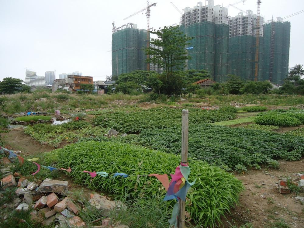 Sốt đất nền vùng ven Sài Gòn